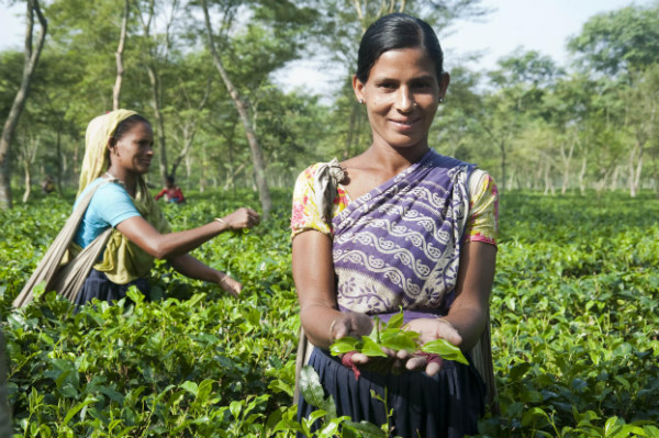 Know where your tea comes from.