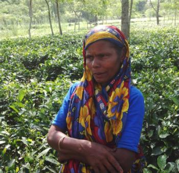 Tea Garden Stories
