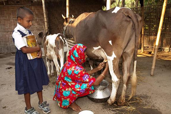 Rainforest Alliance - Cattle Lending
