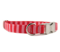 Stacy Dog Collar