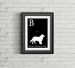 B is for Bernese Mountain Dog Alphabet Art Print