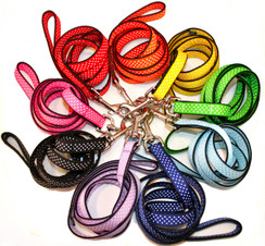 Rainbow Dot Collar and Leash Collection