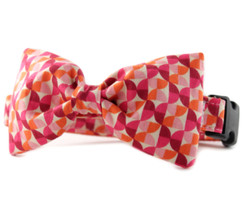 Alyssa in Orange Bow Tie Dog Collar
