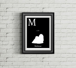 M is for Maltese Alphabet Art Print