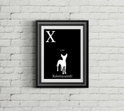 X is for Xoloitzcuintli Alphabet Art Print