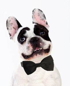 Dog Bow Tie Accessory in Black