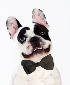 Dog Bow Tie Accessory in Gray