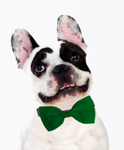 Dog Bow Tie Accessory in Kelly Green