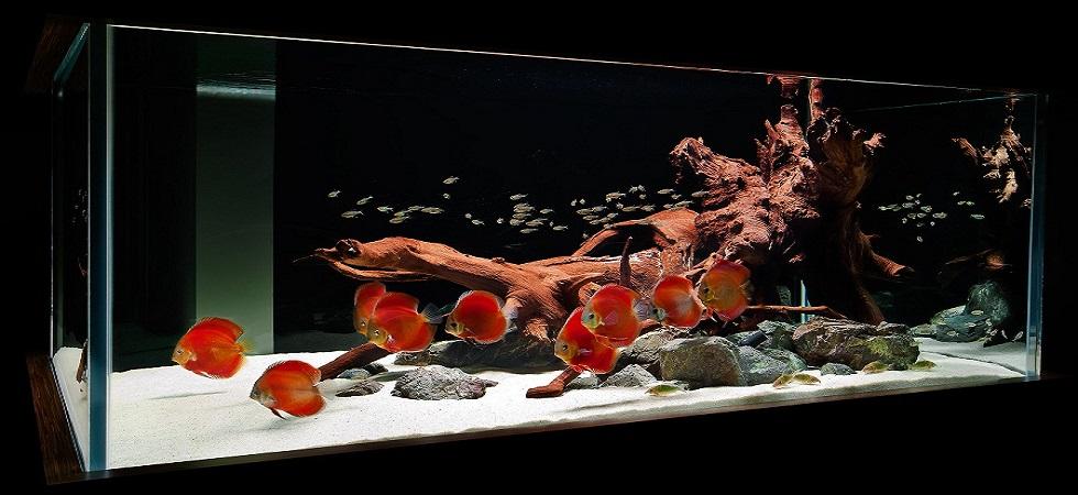 Aquarium Supplies Australia Buy Fish Tank Buy Discus