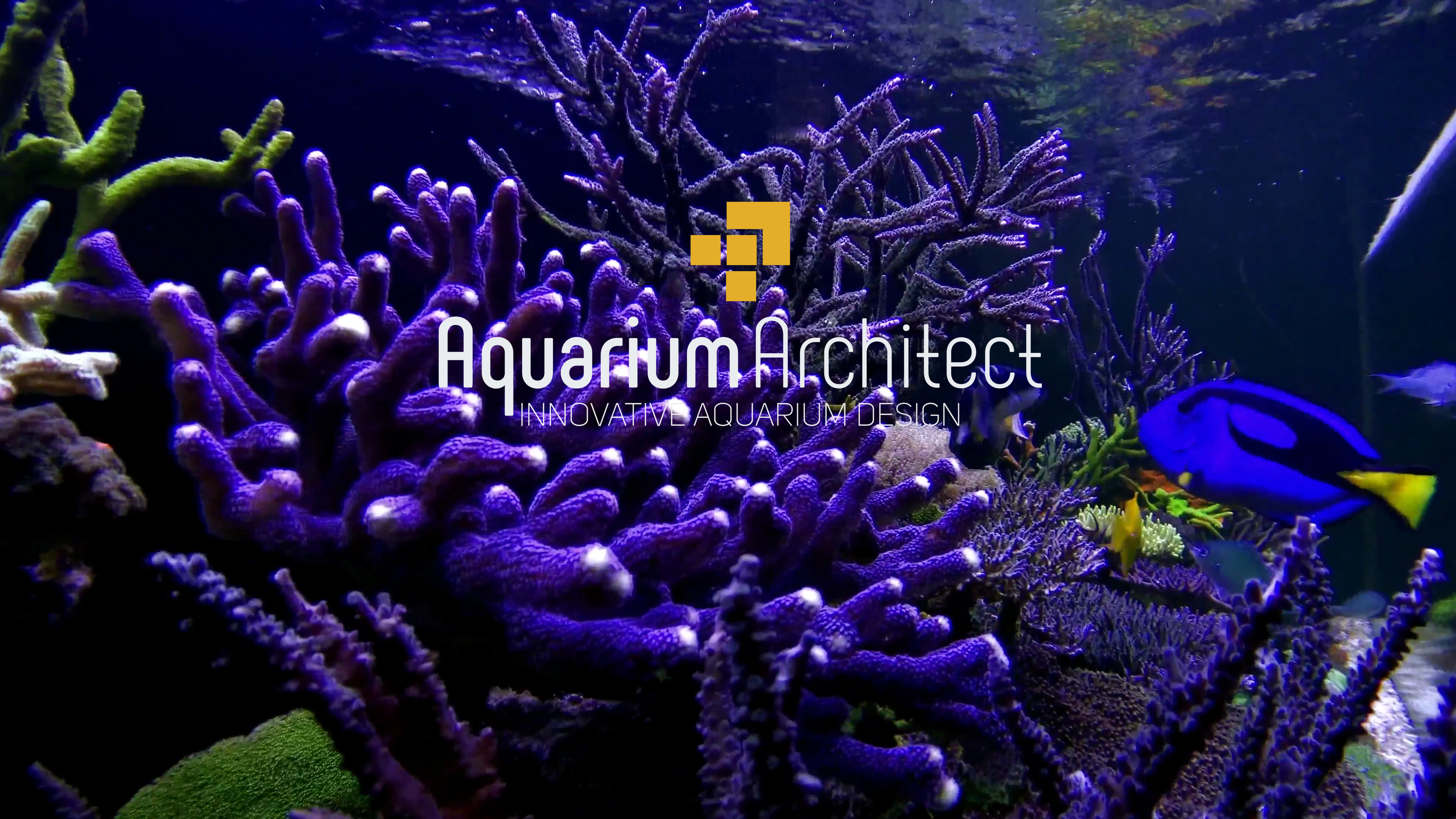 Aquarium supplies online australia click and collect fast for Salt water fish stores