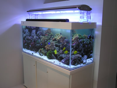 Saltwater Tank Maintenance