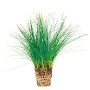 Hair Grass Pots