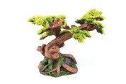 Bonsai Plants Medium