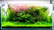 TWINSTAR M3 Aquarium Sterilizer & Algae Inhibitor - suits 20-50L TANK