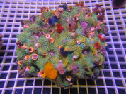 Christmas Worm Rock - Green Small 13 cm