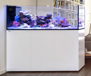 Red Sea REEFER™ Peninsula P650 White