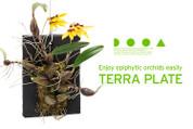 DOOA Terra Plate And Plate Hook