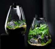 Bioscape Nano Moss Terrarium - 200 Rounded  5W
