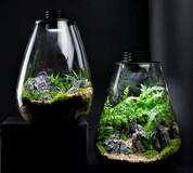 Bioscape Nano Moss Terrarium - 175 Rounded  3W