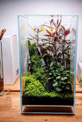 Bioscape Neo Terrarium 30x30x45cm