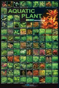 Aquatic Plants Poster