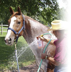 Healthy HairCare Herbal Horse Wash™ - Powerful, Easy To Use Spray System Wash & Rinse At The Turn Of A Switch!  Our sprayer system draws and delivers at a preset dilution ratio for A Perfect Wash Every Time!  With Ginseng Root, Alfalfa, Wheat Germ, Licorice, Nettle, Aloe Juice, Soy Protein, & Arnica Montana Flower. Herbal Horse Wash™ will make your horse deep down clean and shiny in minutes. Wash Bucket & Sponge Not Needed.  No Waste, No Mess, Less Work, Safer For the Environment, Easier. More Economical 8 - 16 Washes per 32 oz.