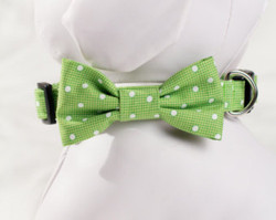 "Green Polka Dot Chasin' Tail Bow Tie  Chasin' Tail Doggie Designs are special handmade creations.  Each piece is made by hand, with care, in Boring Oregon.  Chasin' Tail Bow Ties are fun and attractive collar accesories.  These Bow Ties are available in 3 sizes and attached to your Chasin' Tail collar or any other collar with hook and loop attachments.  Bow Ties are made from a washable fabric.  Gently wash and hang to dry.  Chasin' Tail dog collar Bow Tie accessories can be ironed with a cool iron to remove wrinkles if they should appear.  Chasin' Tail Bow Ties come in the following sizes,  SM - measures 4"" in length  Med - measures 5"" in length  LG - measures 6"" in length   Chasin' Tail also offers matching handmade leashes, collars, and other accessories like fun Flowers to dress up any collar.  Look for them to order and complete your pet's special look."