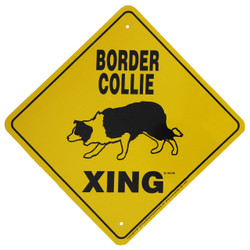 "Border Collie Xing / 12""x12"" / Yellow & Black"
