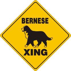 "Bernese Mountain Dog Xing Aluminum 12""x12"" / Yellow & Black"