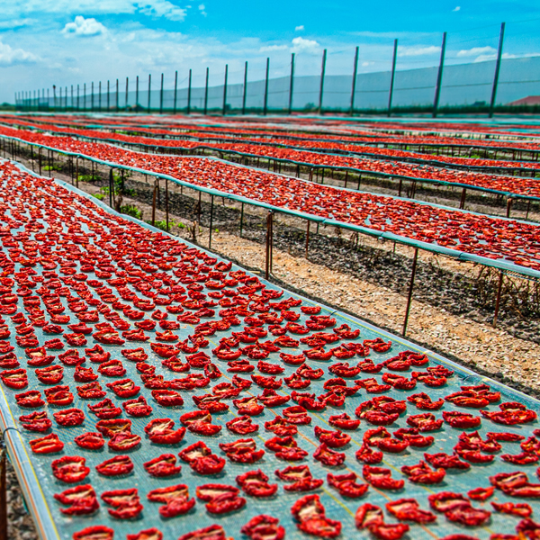 fiordelisi-drying-tomatoes.jpg