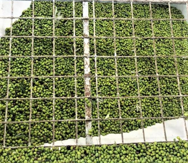 olio-nuovo-olivestri-2020-2b.jpg