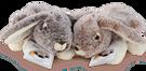 Colombina Classica 100 gr in Plush Toy Rabbit