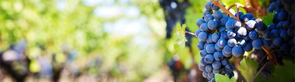 ros-wine-banner.jpg