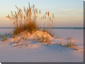 Sea Oats and Sand Outdoor Canvas Art