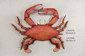 """Giant """"Cooked"""" Blue Claw Crab Metal Wall Sculpture"""