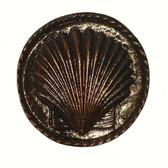 Nautical Cabinet Knobs - Small Seashell - Minimum of 3