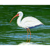 Dick's White Ibis Place Mats - Set of 2