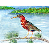 Green Heron II Place Mats - Set of 2