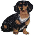 Dachshund Longhaired Dog