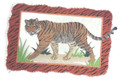 Bengal Tiger With Frame
