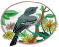 Mockingbird and Aster Circle