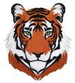 Royal Bengal Tiger face