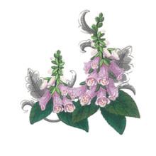 Foxgloves with Flourish