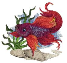 Betta Water Color Fish