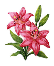 Pink Lily Blooms