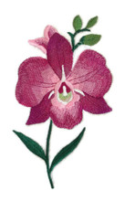 Bloom Orchid