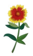 Goblin Blanket Flower with Long Stem