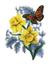 Monarch Butterfly and Daffodils