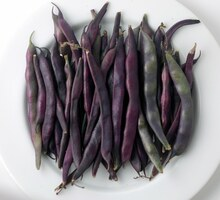 A Cosse Violette Pole Bean Seeds