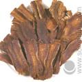 Cotus Root